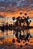 Phoenix Sunrise