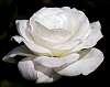Delicate White...........
