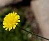 Yellow.................