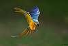 Birding with non birding lens