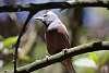 Afternoon Jailbirds