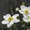 Cemetery Flowers - Highgate