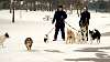 Walking the dogs at King's Bridge park, Niagara Falls