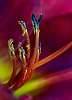 Exotic Flower Stamen
