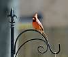 A Cardinal -  DA* 300 + K-3