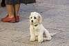 Dogs in Sicily