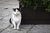 "How do you say ""meow"" in Italian?"