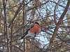 The winter birds