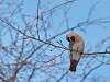 Winter Birds IV