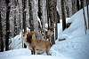 """""""Deer being Alert"""""""