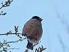 Winter birds strike again :)