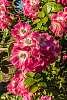 Rose garden shoot