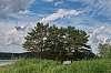 My Siberian Landscapes