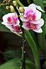 Orchids Are So Cool.