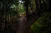 Oregon Trails 2