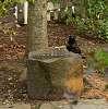 Sheryl the Crow
