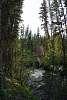 A stream in the Yukon