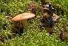 This year's mushroom hunt with BW Bear