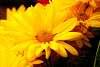 Very nice looking flower.