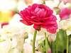 A Beautiful, but Vertical Rose.