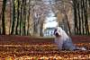 Noam the English Sheepdog in autumn colours