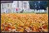 Autumn walk through the churchyard