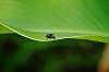 Negative fly
