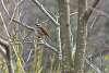 DFA 100 macro wr as a birding lens