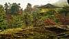 Kinkakuji in a moss garden