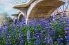 A Bridge Over Blue Flowers. :)