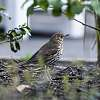 Birds in the Botanic Gardens