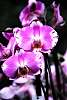 Awesome Orchids.