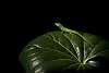 Green Lizard in great light