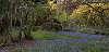 Rowallane Gardens, County Down.