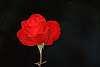Red Rose, Red Rose.