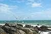 Sea, rocks, sun, wind & gulls