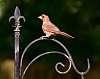 A Rather Ragged Redbird