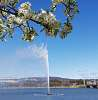 Spring in Canberra