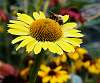 An Echinacea Flower I Believe, With A Bonus. :)