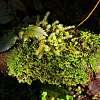 Nature's bonsai