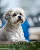 Pennie, our little doggy
