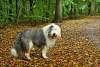 Wet dog at f1.2