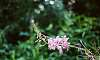 Forest Flower on Film