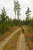 Bike and Pines