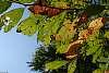 Autumn Approacheth