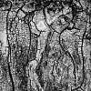 tree surface portrait