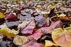 Falling for fall leaves (or fun with leaves part 2)