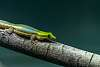 Rosamond Gifford Zoo 1-2-2020