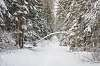Winter in a forest