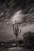 Saguaro at Night
